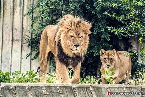 fotos animales zoo de madrid zoo de madrid barrios de madrid