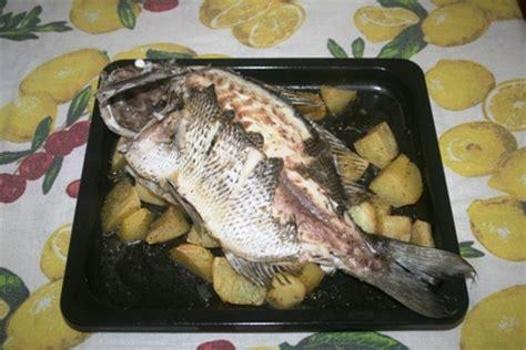 come cucinare il sarago girodivite sarago reale con patate