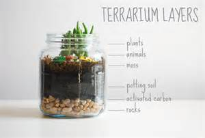 terrariums in interior design