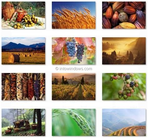 live time themes download official harvest time and windows live clouds