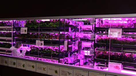 urban vegetable garden system  led lighting diginfo