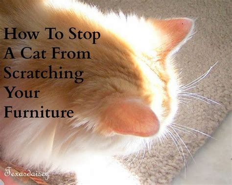 How To Get Cats To Stop Scratching Furniture texasdaisey creations how to stop a cat from scratching