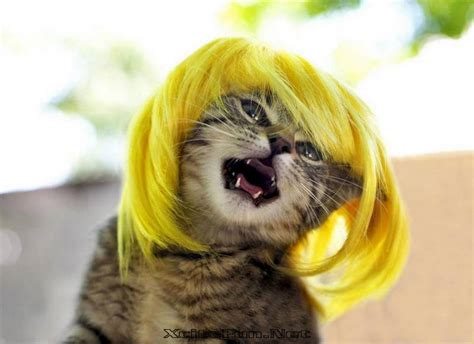 cat wig cats colorful makeover wigs xcitefun net