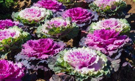 fiori da giardino autunnali fiori autunnali leitv