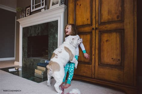 boy humping bed hump day ediiton the little girl big dog photo journey