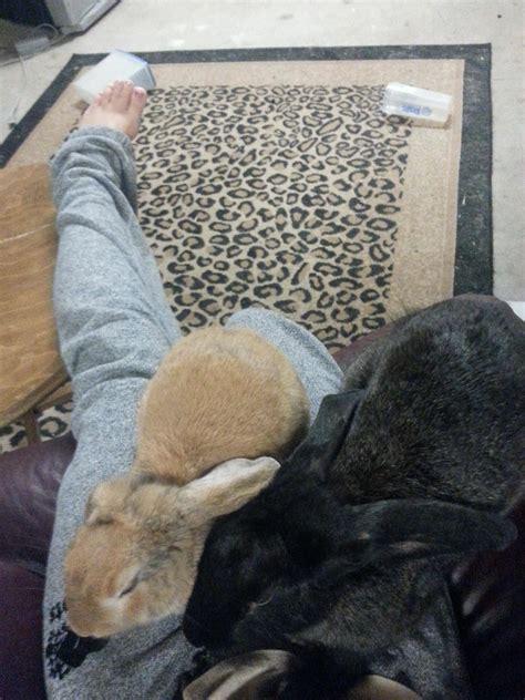 Lop Polymailer Lop Plastik 20 X 30 Pink Poly Mailer Kantong rabbits the intelligent loving and often misunderstood pet