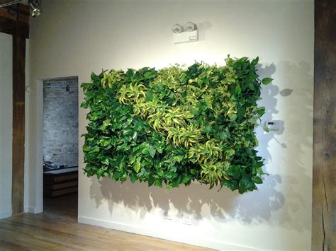 interior plant wall green walls living walls vertical gardens wall gardens