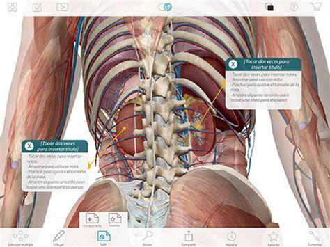 el sistema caged y 1910403520 parte del cuerpo humano donde se aprecian principalmente los ri 241 ones en la caja tor 225 cica
