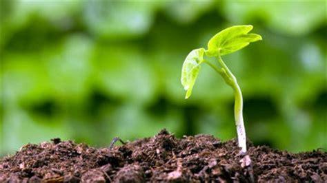 le pour plante image gallery plantes