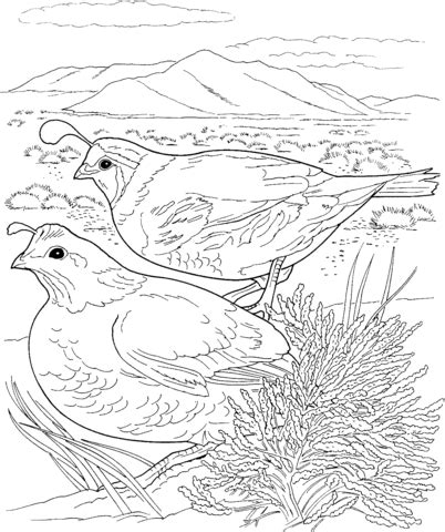 coloring page quail 301 moved permanently