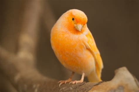 top 10 best pet birds for every woman