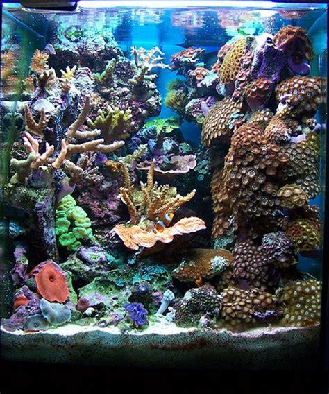 marine tank aquascaping ignasi torralba s 16 gallon nano reef home fish and