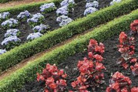 low lying shrubs for borders   home guides   sf gate