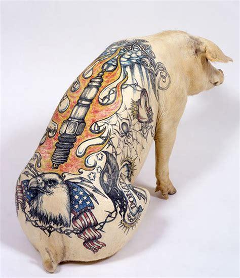 un artiste r 233 alise des tatouages sur des cochons pour en