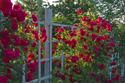 Garden Of Roses by How To Design A Garden