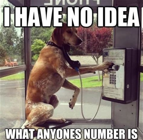 Dog Phone Meme - your dog doesn t know your phone number 41 memes