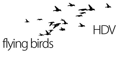 Motion Graphics Flying Birds Videohive Flying Pictures After Effects Template Free