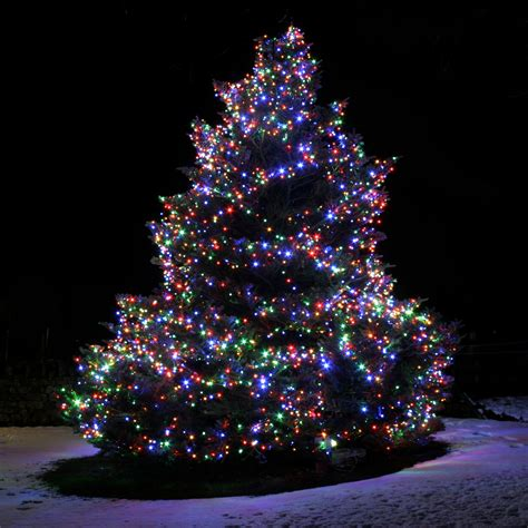white outdoor christmas trees with lights home design
