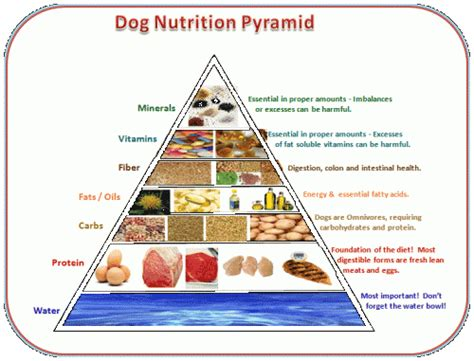 carbs in dogs nutrition pyramid dogs
