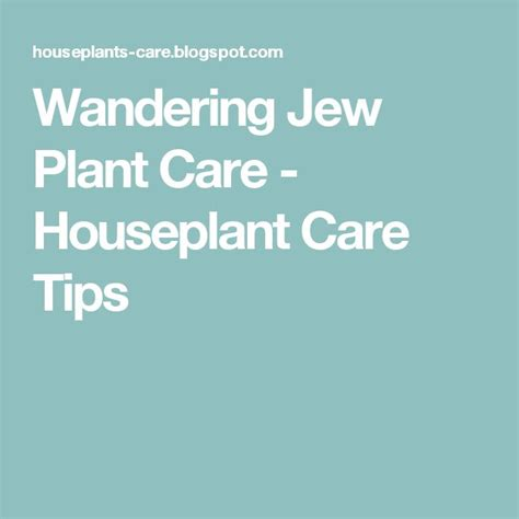 Care Tips 3 by 1000 Ideas About Wandering On Plant Care