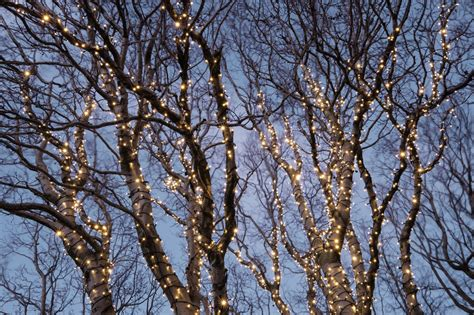 how to hang lights on a tree 28 best hanging lights outside tree hang