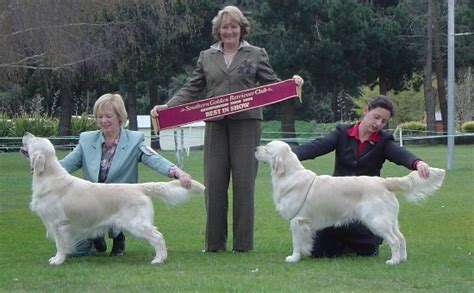 southern golden retriever club speciality results