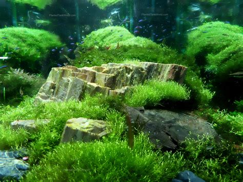 freshwater aquascaping inspiration my world of planted freshwater aquariums