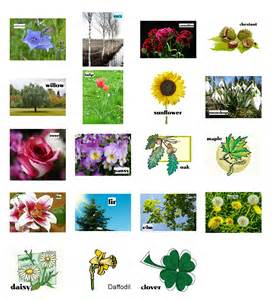 plants learn the names of 15 kinds of plants games to