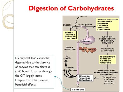 carbohydrates enzymes biochemical aspects of digestion of proteins