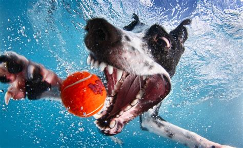 underwater dogs underwater dogs a hilariously thrilling gallery of dogs underwater by seth casteel
