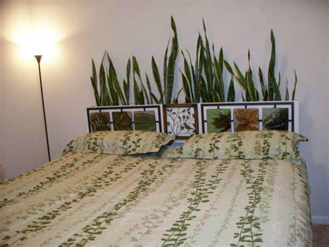 zimmerpflanze schlafzimmer die besten 17 bilder zu zimmerpflanze auf