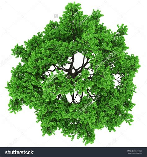 tree top view clipart clipartsgram com