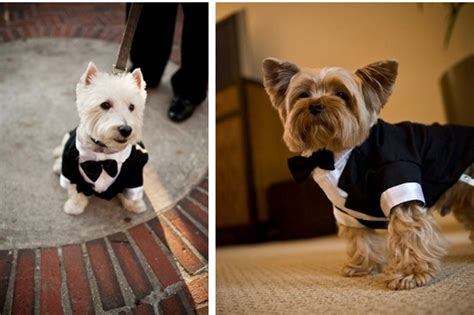 puppy in a suit dogs dress in suits to be gentlemen wishforpets