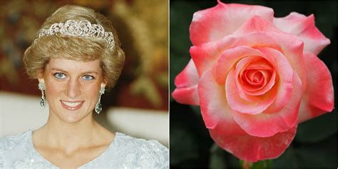 princess diana rose flowers named after royals princess diana roses