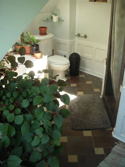 indoor plants bathroom choosing condo plants that s best for you