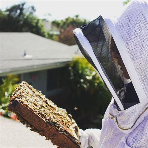 backyardhive new dvd alternative beekeeping using the top 70 best bees images on