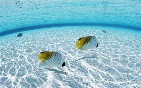 clearest ocean water in the world maldives crystal clear water maldives the world s most