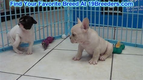 puppies greenville sc puppy for sale in greenville sc photo