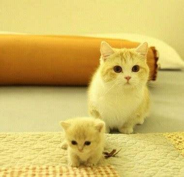 wallpaper chat lucu imagenes de gatitos para descargar bebes listas