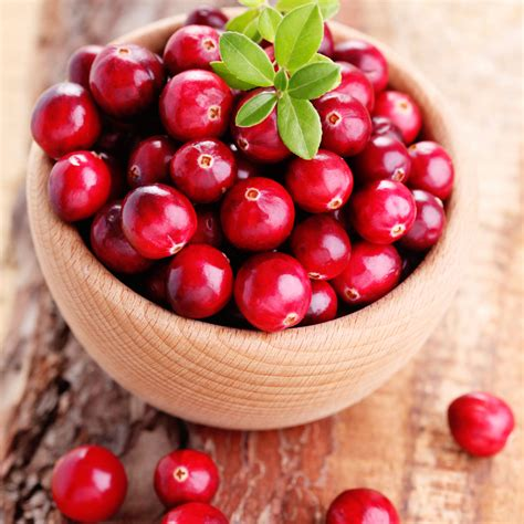 Fragrance Of The Month Cranberry Bark by Fragrance Of The Month Cranberry Wholesale Supplies Plus
