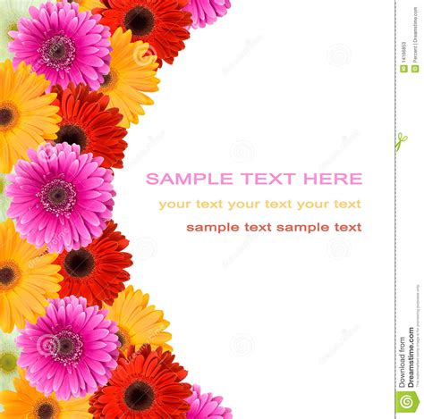Gerbera Designs Xl Messenger by Gerbera Flowers Frame Stock Image Image Of Branch Purple