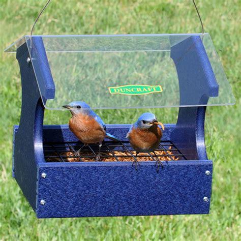 duncraft com mealworm maximizer bluebird feeder