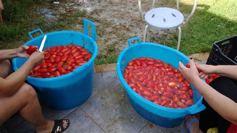 salsa pomodoro fatta in casa la salsa fatta in casa come una volta