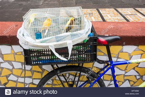 canary bird cage stock photos canary seller with birds in cage on back of bike outside