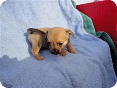 pug breeders sacramento ca pug mix puppies sacramento ca breeds picture