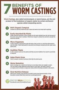 Gardening Indoors - how to make a worm bin grow real food organic non gmo food in your backyard