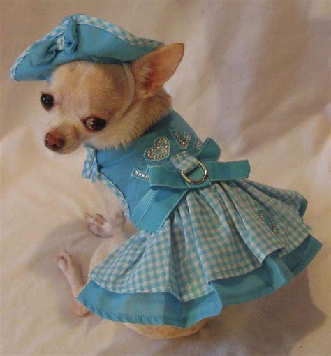 Dress Babyblues Set beautiful baby blues chihuahuas in costumes