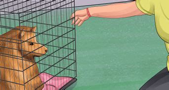 puppy in crate during day how to teach your to the crate with pictures wikihow