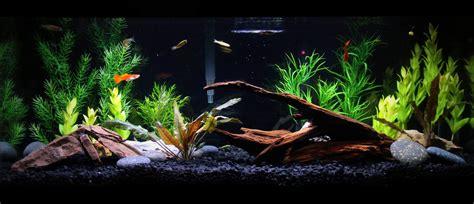 design your aquarium online 20 gallon aquarium live plants google search pets and