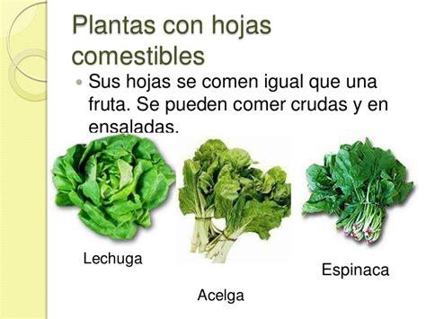 imagenes de hojas verdes comestibles plantas seg 250 n su uso 3